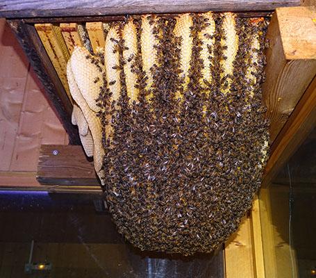 visite guidée la grange aux abeilles estivareilles