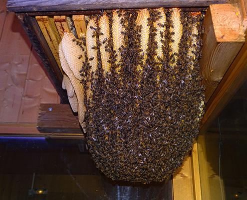 miellerie grange aux abeilles estivareilles